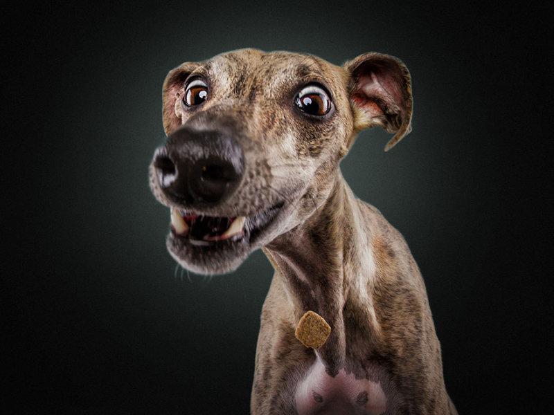Гифка, прикольные фото и картинки собак