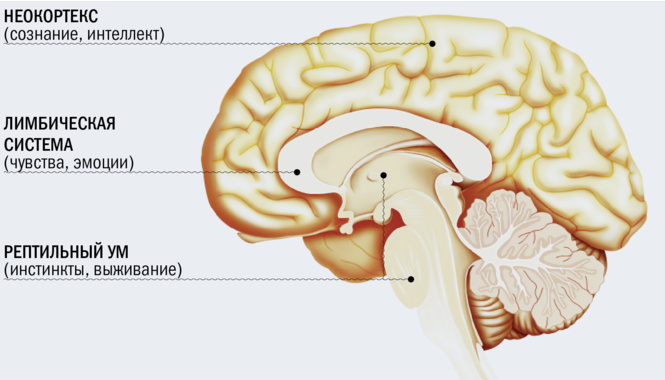 Спинной мозг крестцы сексуальное наслаждение