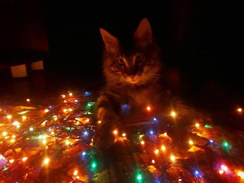 Тёплая уютная атмосфера для праздника елка, игрушки, кот, новый год, разбой