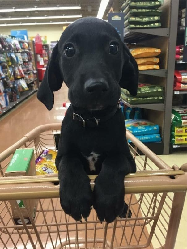 Time To Go Shopping!
