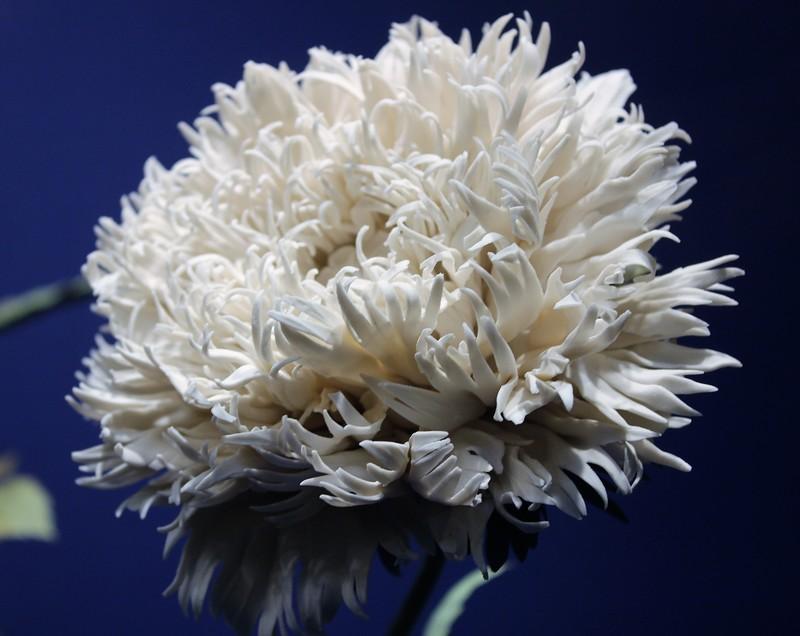 Фарфоровые цветы в Эрмитаже