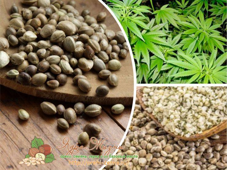 Семена конопли в народной медицине