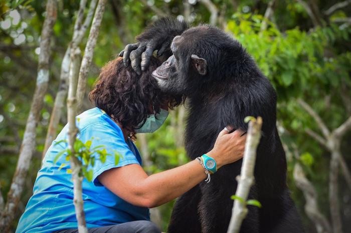 История самого одинокого шимпанзе на свете