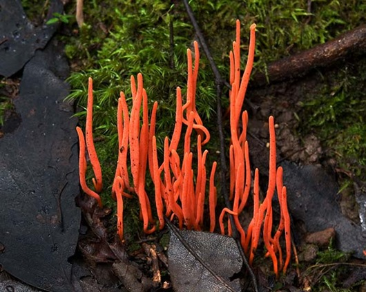 Грибы - красавцы грибы