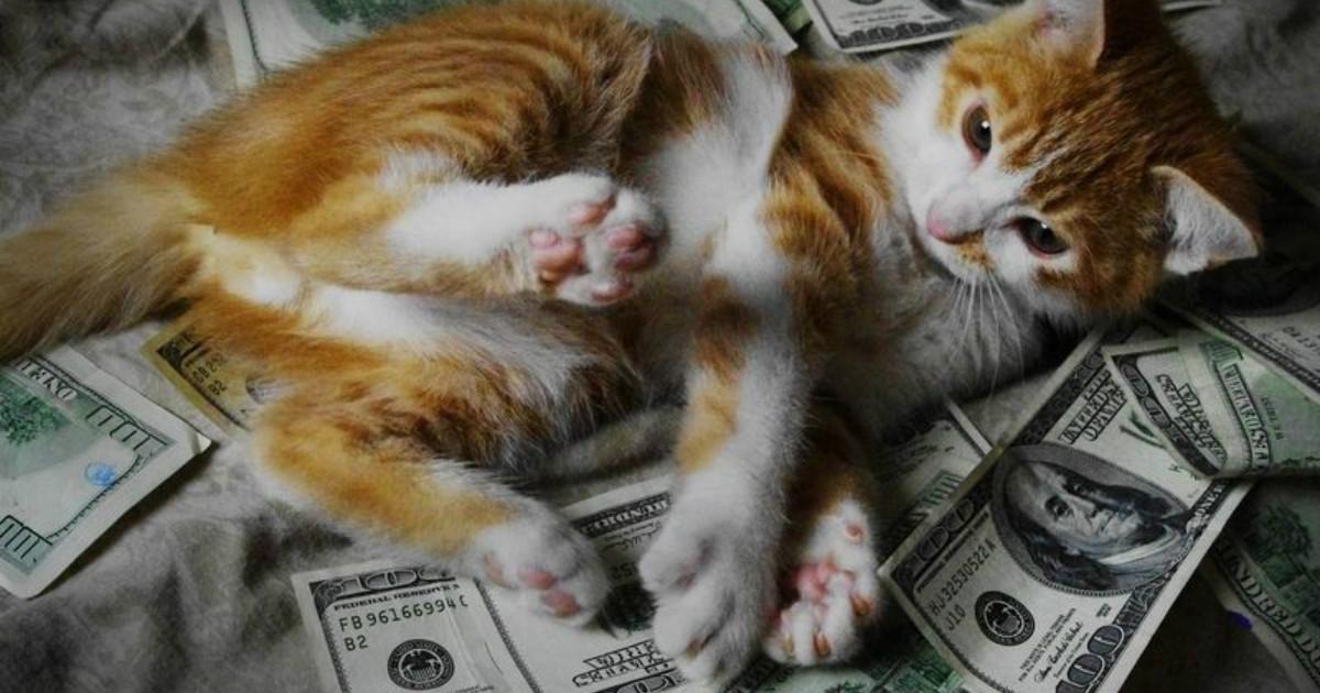 Не завидуем, просто смотрим! Коты-счастливчики получили в наследство 300 тысяч долларов!