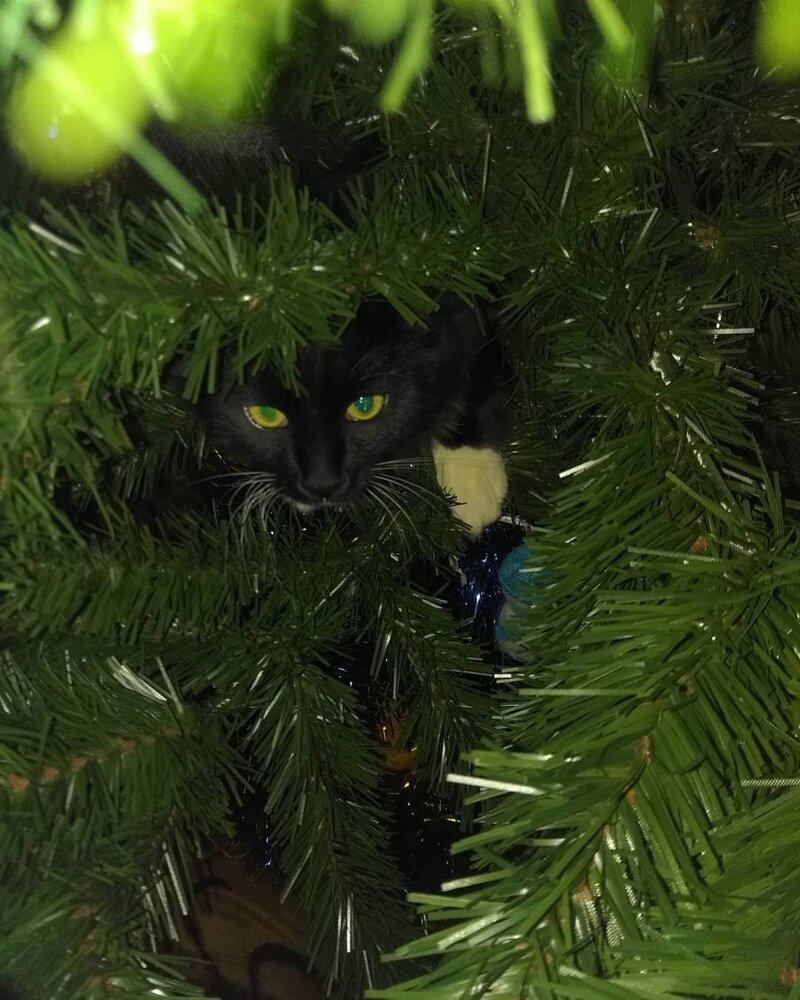 В засаде елка, игрушки, кот, новый год, разбой