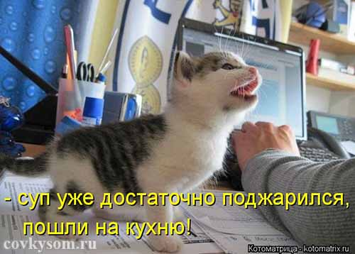 Кулинарные котоматрицы 33 (юмор)