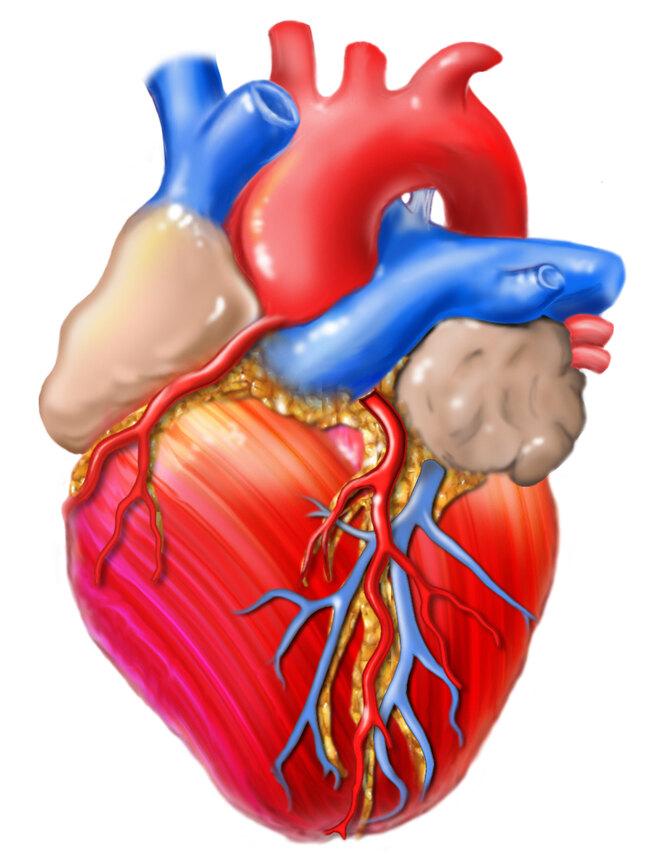 6 тканей и функций организма, которые восстанавливаются диетой женьшене, которые, вещества, способны, способствуют, витамин, вкуркуме, содержится, однако, ткань, клеток, регенерации, стимулировать, Клетки, дополнением, альтернативой, гормональной, терапии5, совсем, сердцаЕще