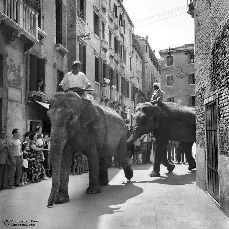 Слоны в центре города архив, венеция, негативы, фотографии