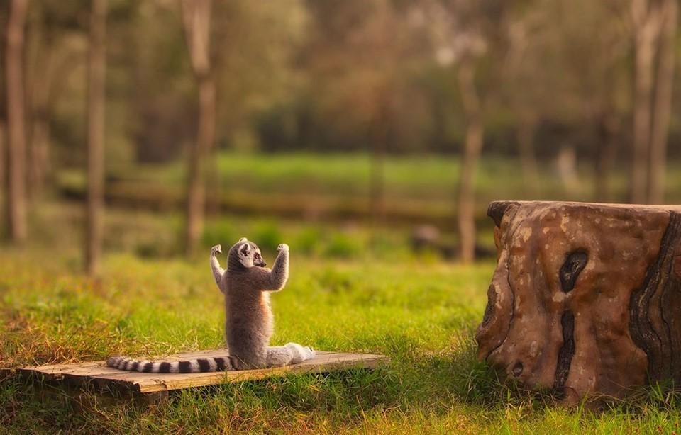 Животные-йоги