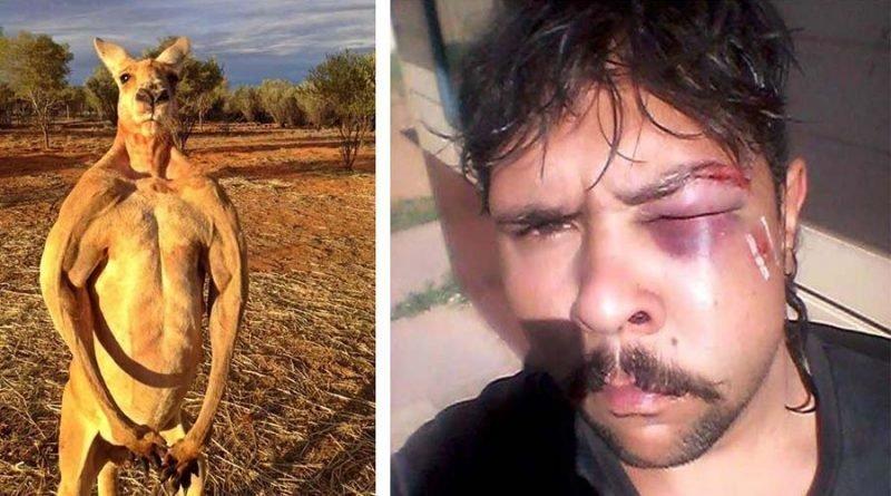 В Австралии кенгуру нокаутировал охотника, сломав ему челюсть