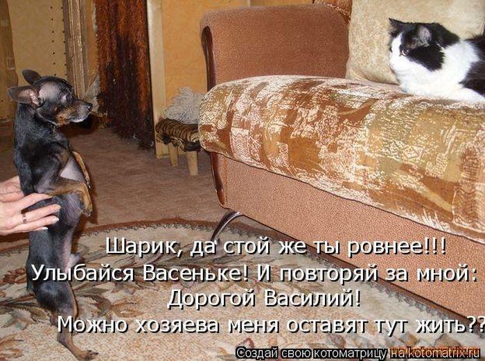 Открытки, смешные картинки с собаками и кошками с надписями