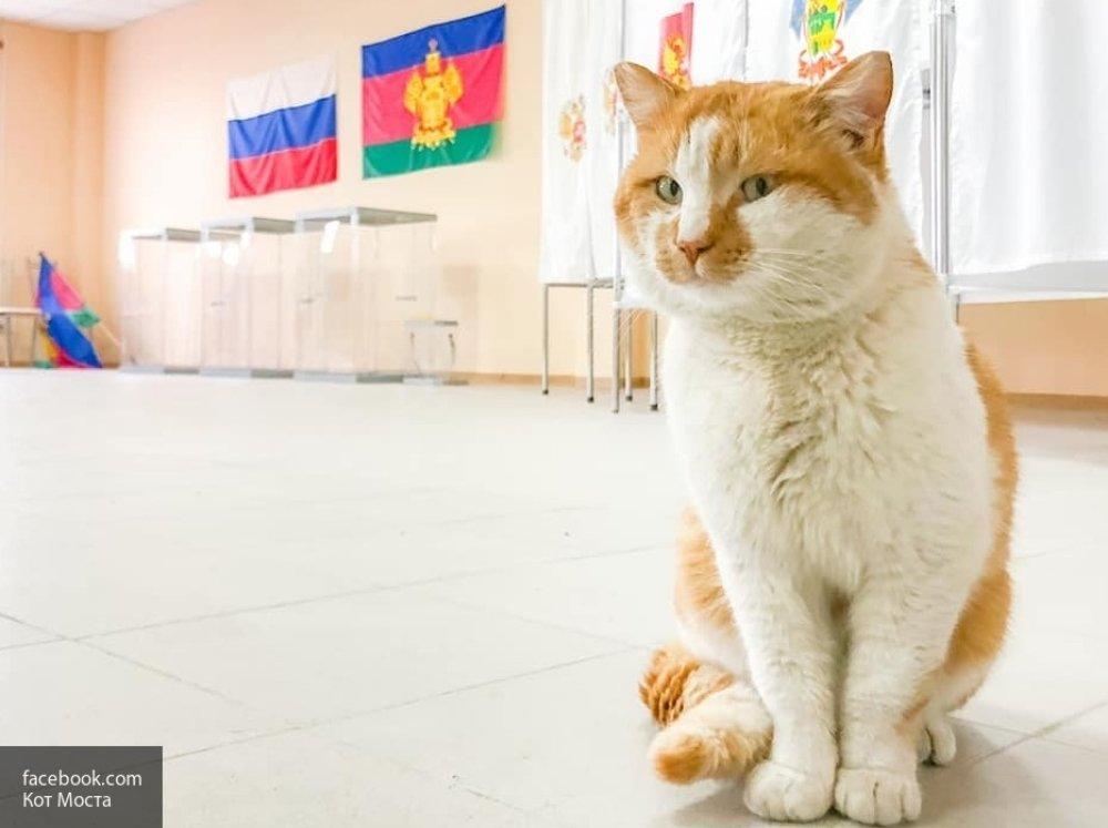 Кот Мостик пришел на выборы …