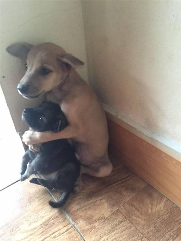 Los cachorros de un templo budista, que siempre que se abrazan