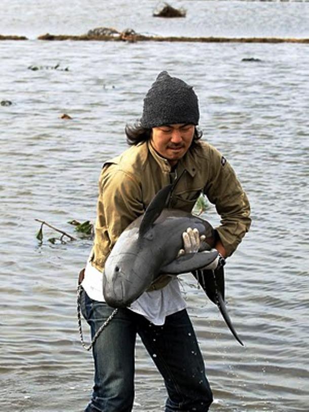 Истории о спасенных животных, которые вернут веру в человечество добро, животные, спасение