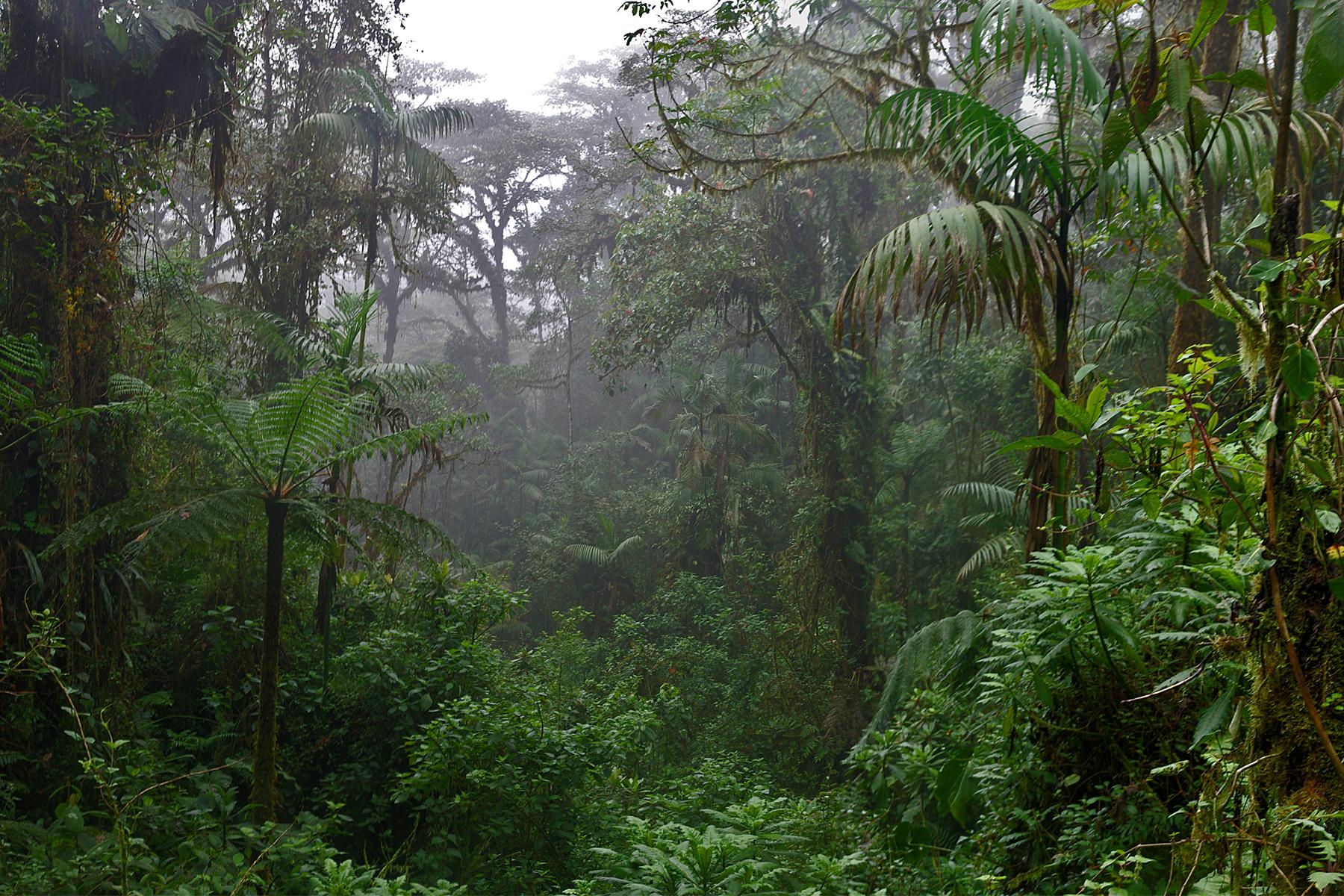 Экваториальных лесов картинки
