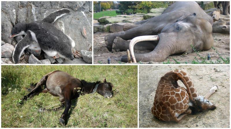 Как спят животные? супер