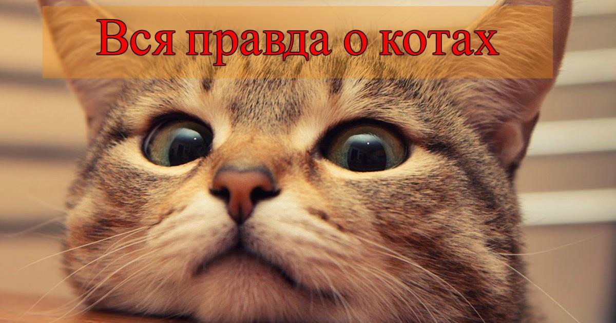Так и живём! 19 иллюстраций, которые демонстрируют жизнь кота )