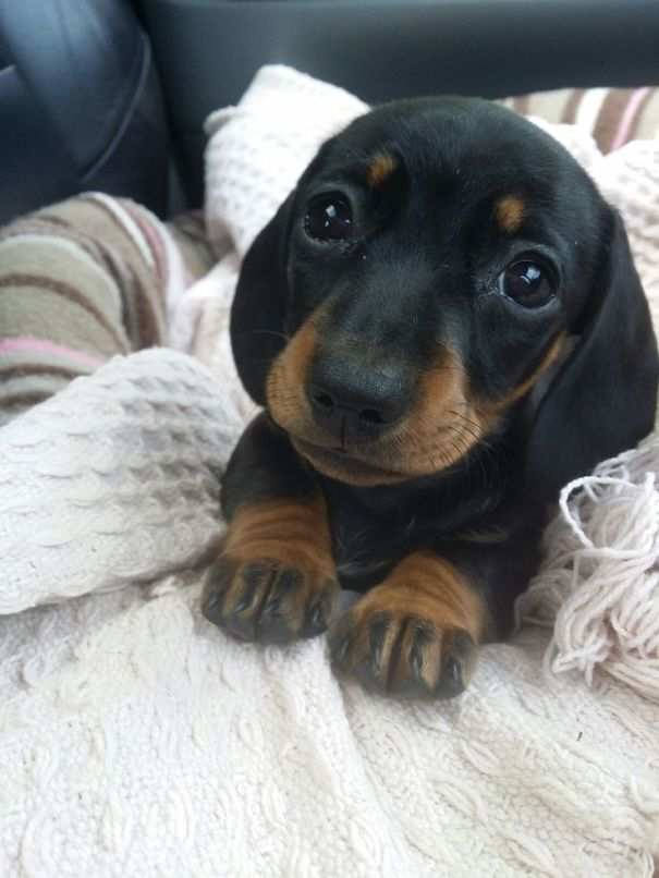 And This Puppy-dog-eyed Sweetie