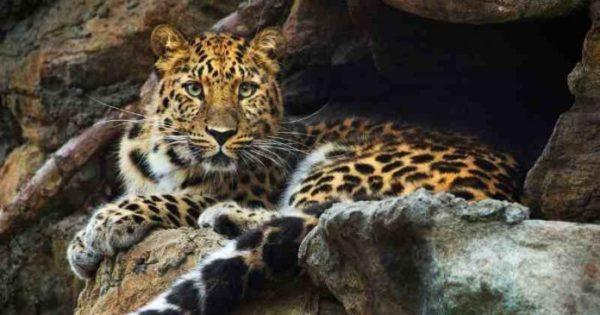 10 самых редких животных в мире