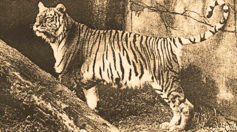 Яванский тигр вымерли, животные, топ10