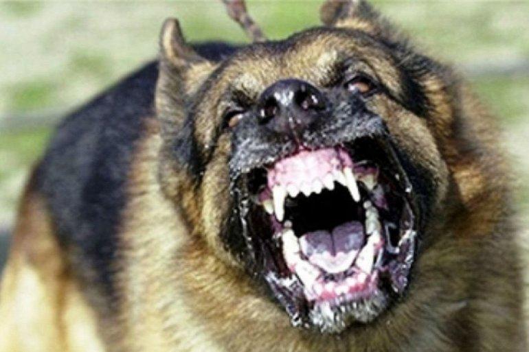 опасные породы собак