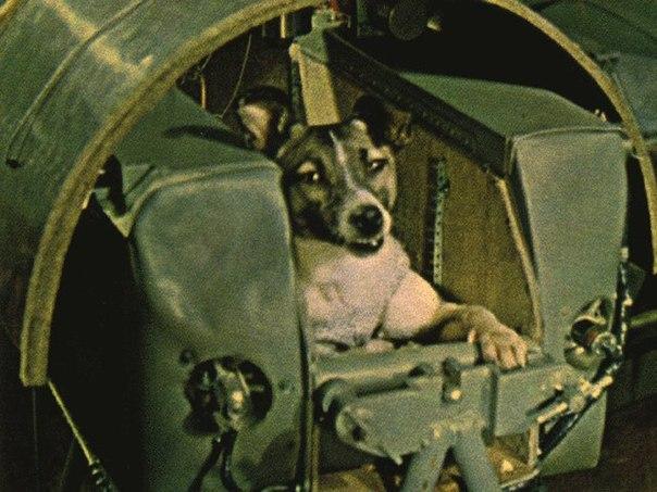 Первая собака-космонавт.