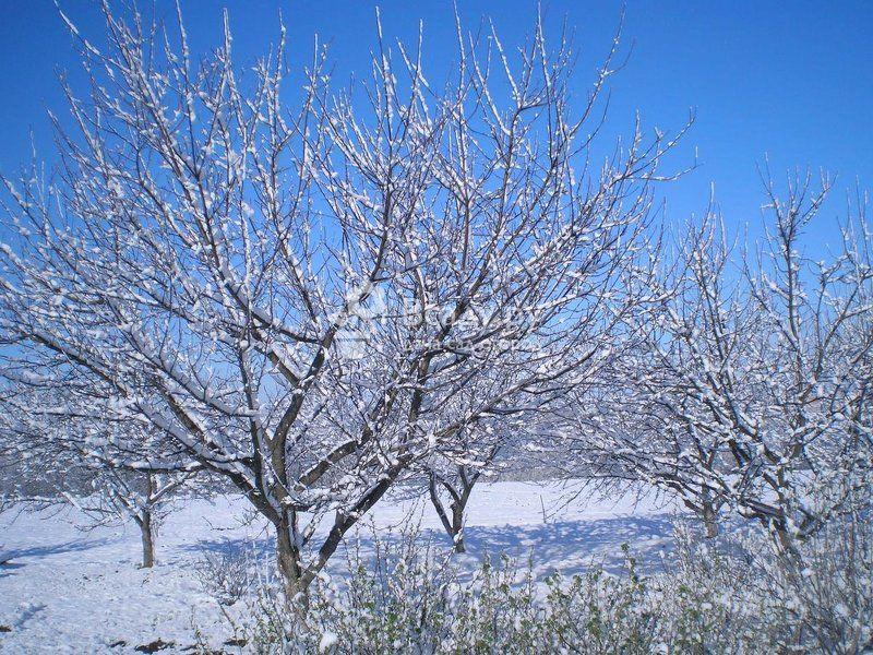 Места зимовки вредителей сада и огорода, способы борьбы с ними