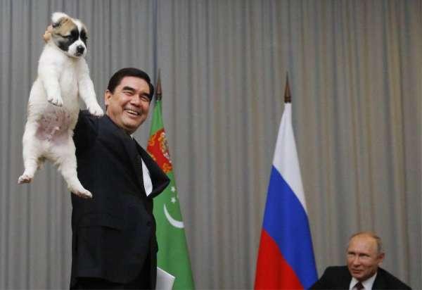 «По-человечески правильно». Алабай Путина заставил твиттер спорить, как надо держать щенят