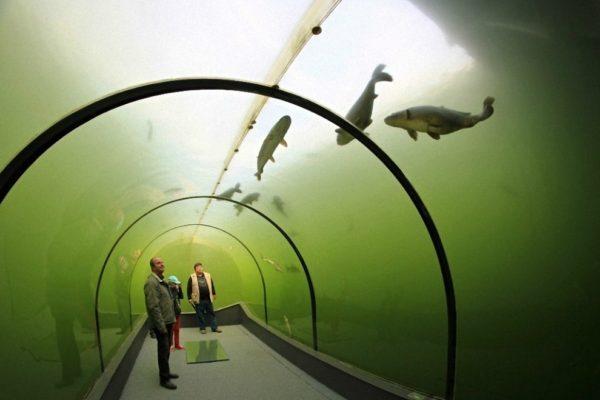 Уникальный туннель под озером в Чехии