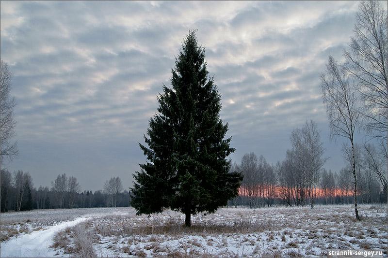Березовские поля  –  чудесное явление зимой