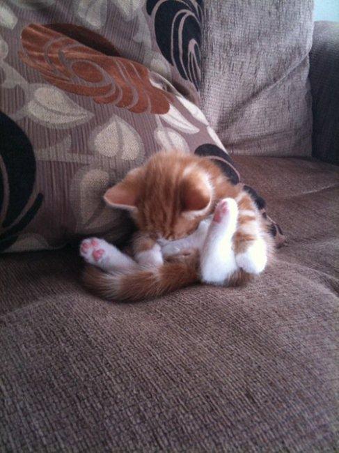 Как спят коты --12 любимых п…