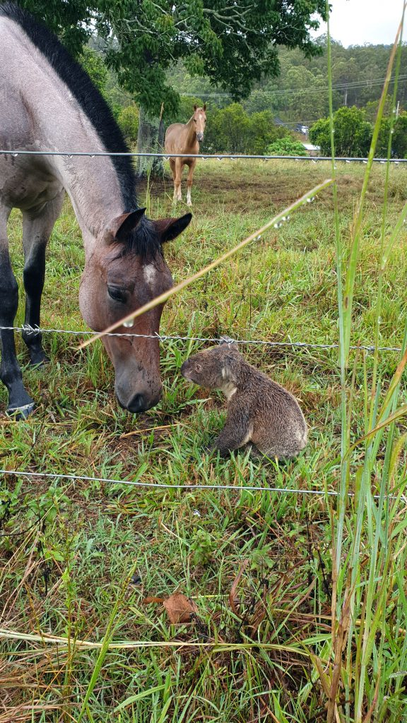 На ферму заявился незваный гость, приковав к себе внимание лошадей видео, дикая природы, дружба животных, животные, кола, лошади, милота