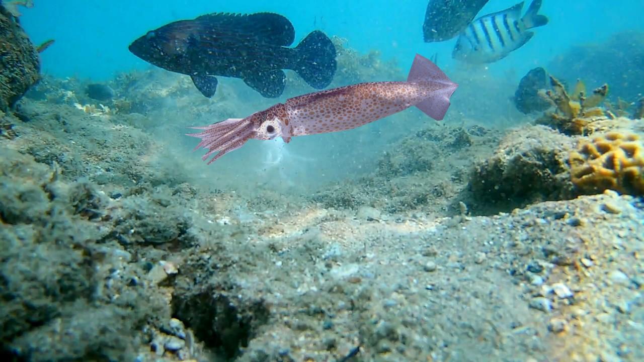 Рыба атакует КАЛЬМАРА!!! Подводная съемка