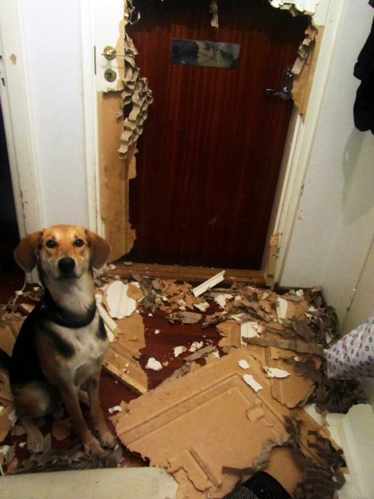 Препятствие уничтожено! | Фото: Buzzive.com.