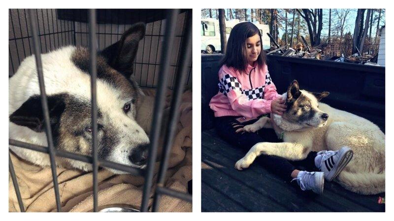 Потерявшаяся во время пожара собака вернулась к хозяевам через 3 месяца