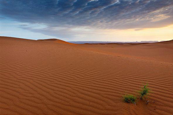 Выносливые растения пустыни