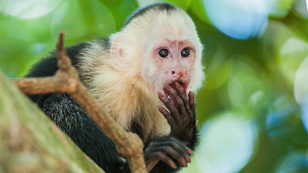 В крымском зоопарке обезьянк…