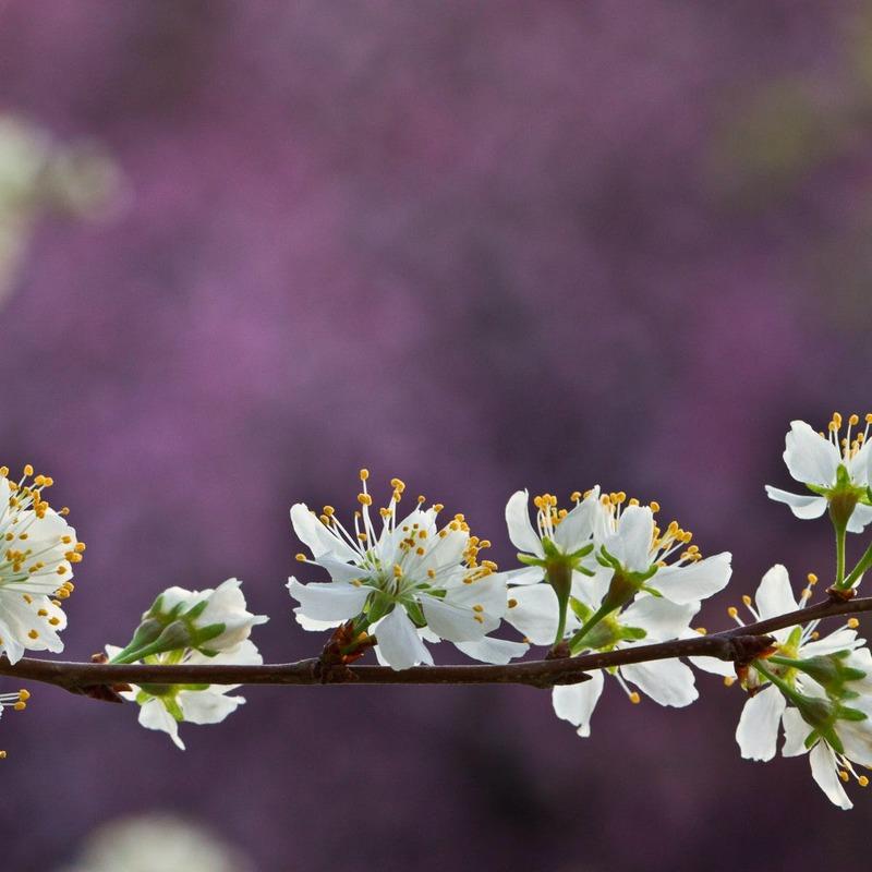 Что происходит с нашим организмом весной