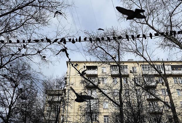 «Я была уверена, что там живет шваль». Мать-одиночка о том, как самой купить жилье в России и не сойти с ума жилье,о недвижимости