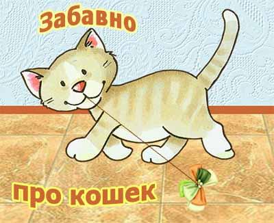 Забавные истории из жизни кошачьих