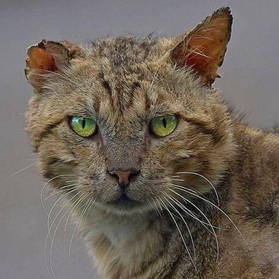 Боевые коты