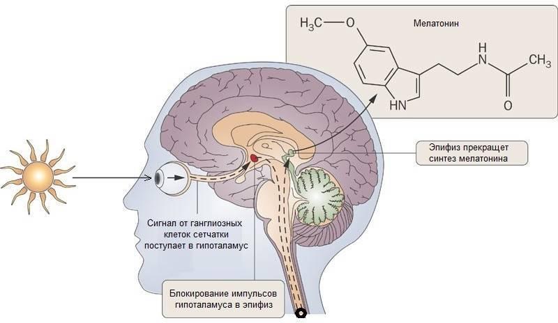 Кальциноз шишковидной железы: что нужно знать о здоровье «третьего глаза» шишковидной, фтора, кальция, железы, железу, которые, только, магния, функции, уровень, кальцификации, эпифизе, мелатонин, кальсификации, кости, откладываются, хронических, влияет, активно, гормональный