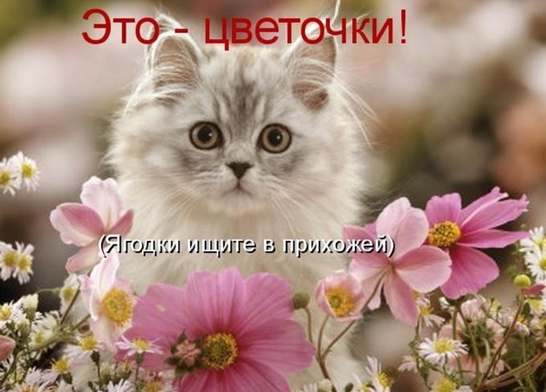 Животные на фото – это всегда красиво и забавно)