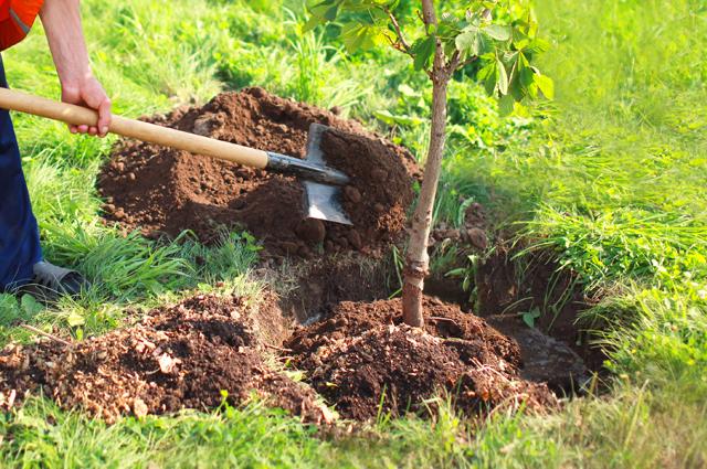 Пора активного роста. Какие работы предстоят садоводам в июне?