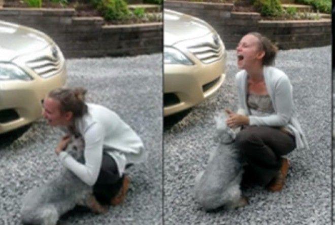 Увидев хозяйку собака — упала в обморок