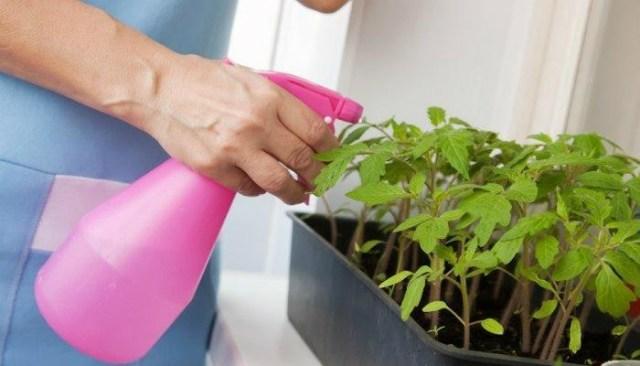 Опытный садовод поделился секретом средства от всех болезней рассады