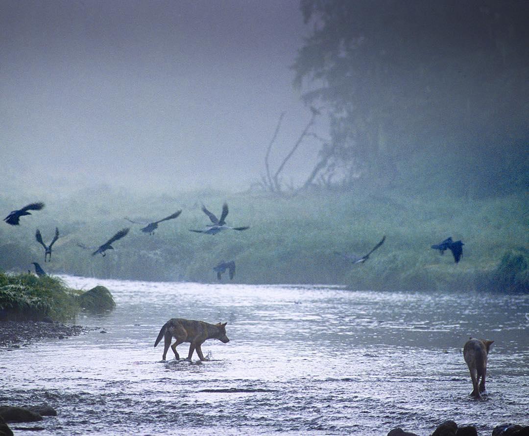 волк и море картинки сегодня