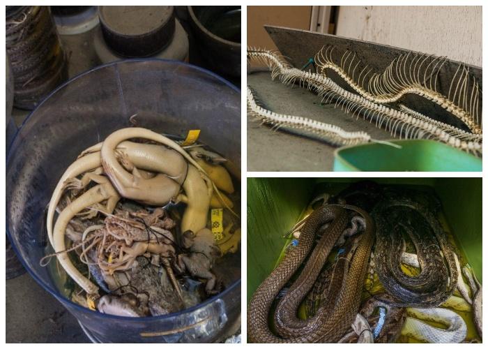 Тысячи экспонатов оказались заброшенными вместе со зданием (Запасник Научно-исследовательского института змей, Япония).