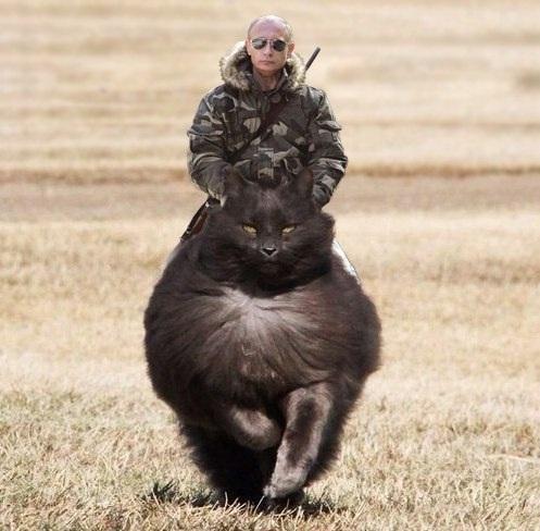 Пурга Путина